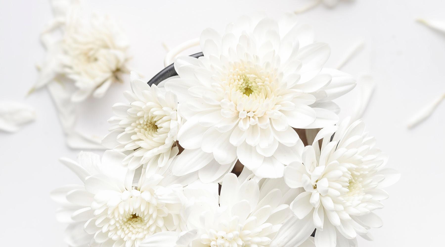 Floristik – Weiße Blumen – klein