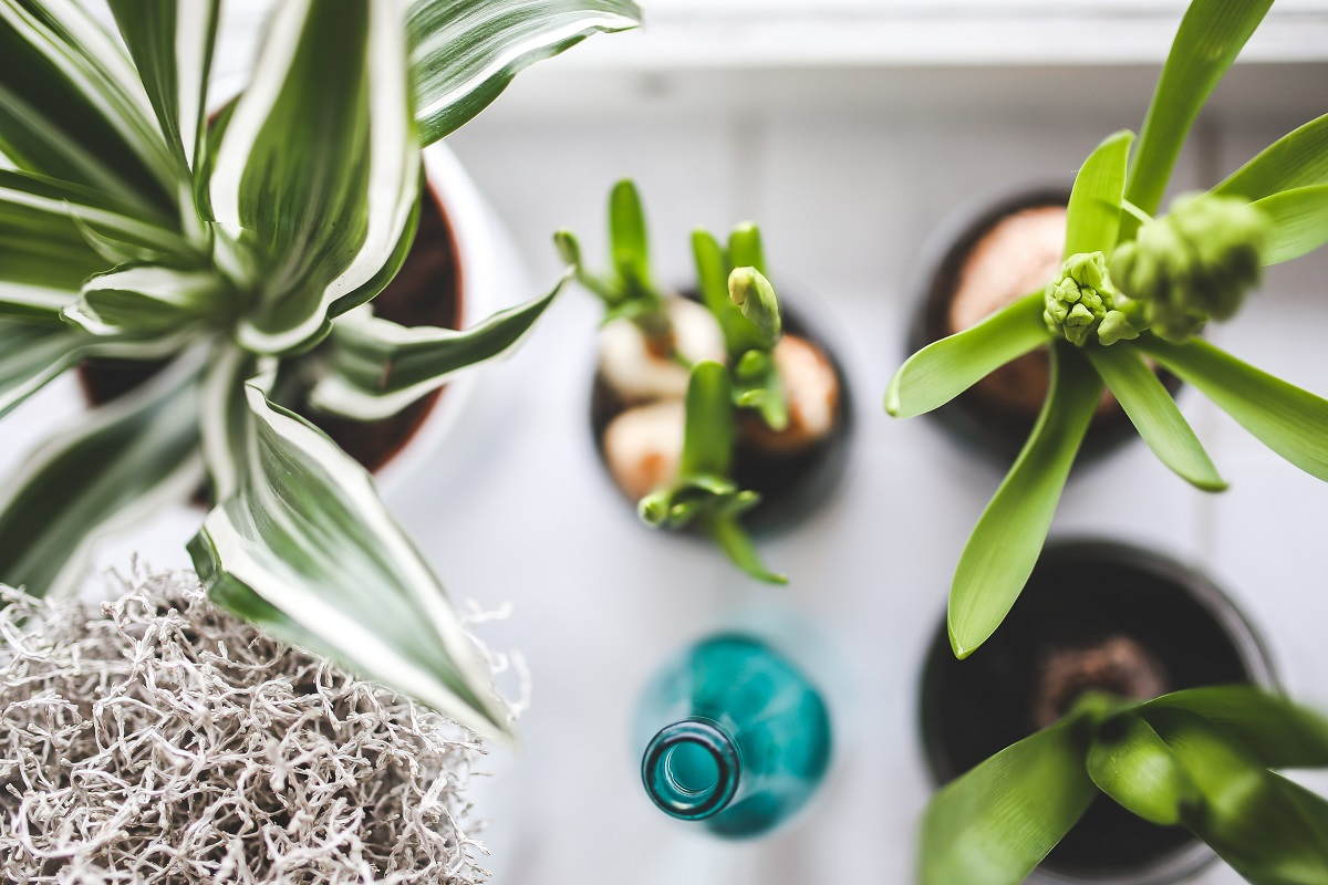 SBW_Pflanzen_Wachstum_Anzucht